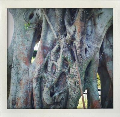 Tree-vines-1