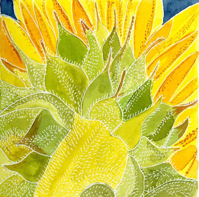 sunflower297